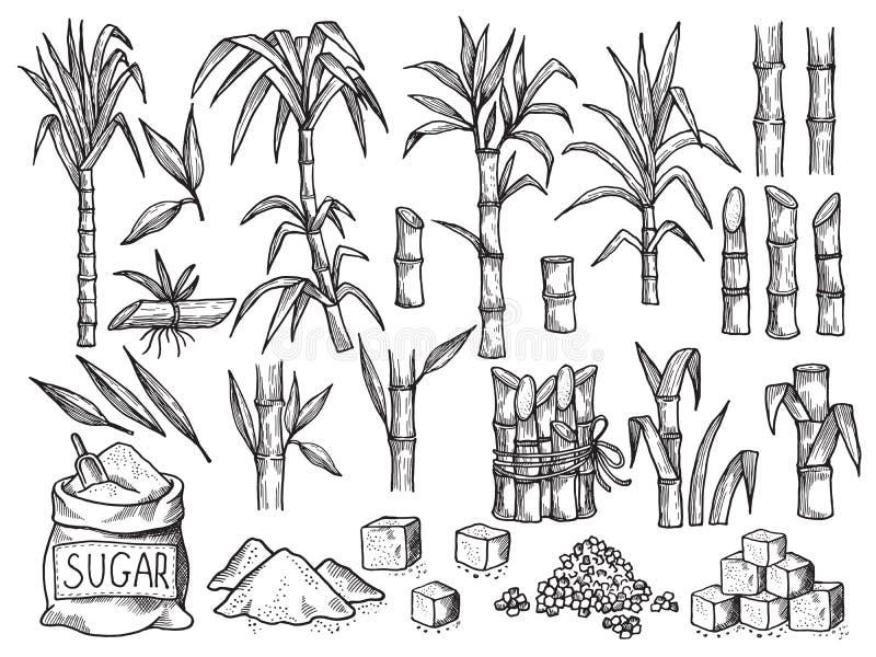 Sucrerie Production agricole de la collection tirée par la main de vecteur de plantation de canne à sucre illustration de vecteur