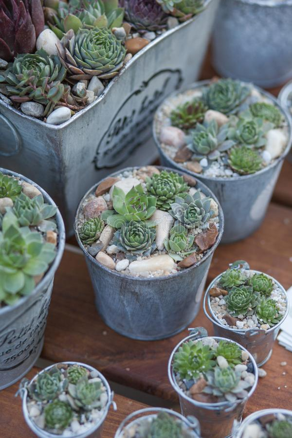 Sucullents en potes Décor casero creciente Decoración botánica verde foto de archivo