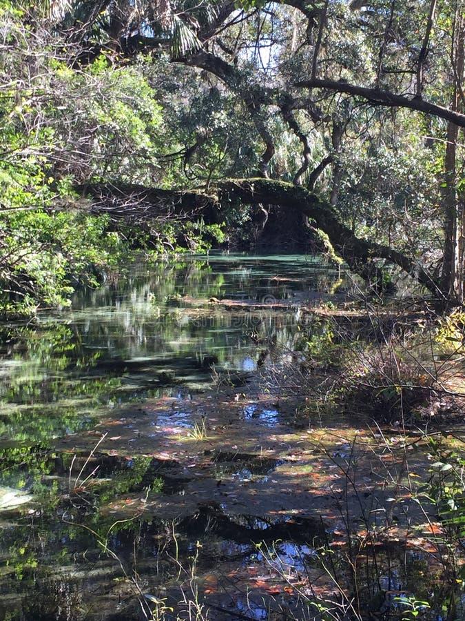 Sud la Floride de parc d'état de Dunellon photo libre de droits