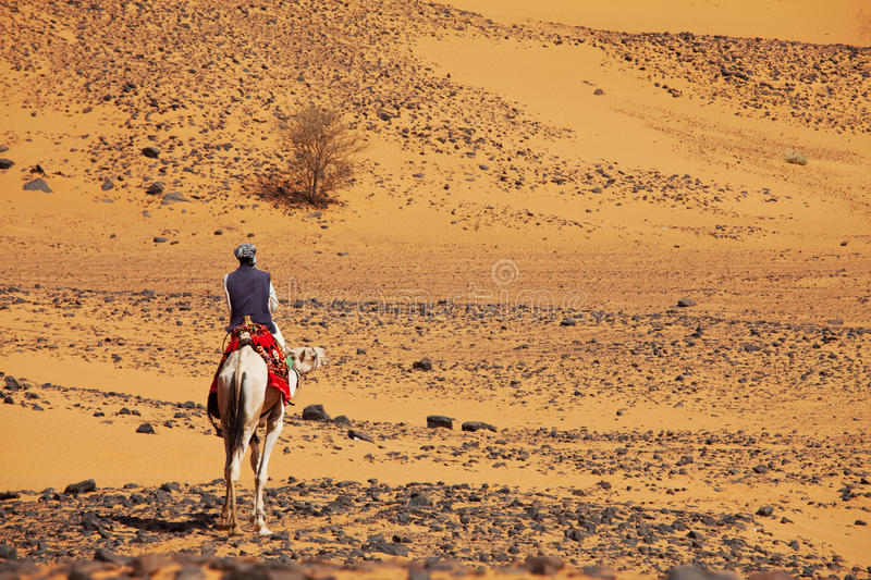 Download Sudanese camel rider editorial stock photo. Image of africa - 54188663