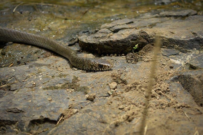 Sudden snake stock image