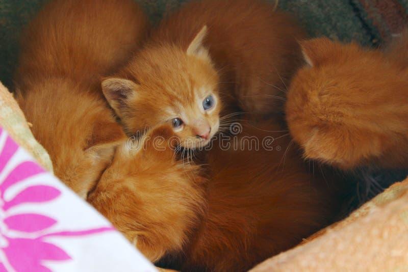 Suddig bästa sikt av gulliga små kattungar i asken tillfälliga kattungar utomhus arkivbild