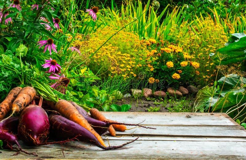 Suddig bakgrund av det trädgårds- och träskrivbordet för höst med beta och moroten arkivfoto