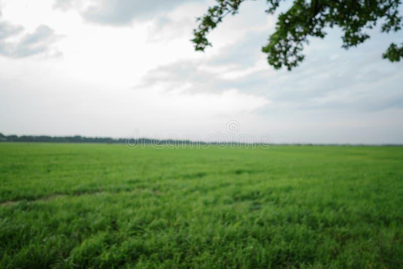 Suddig bakgrund med eken och fältet royaltyfri fotografi