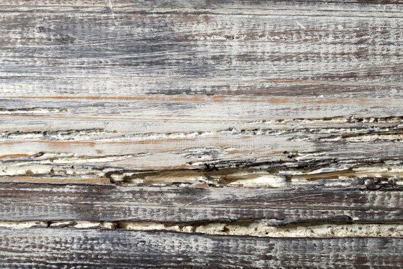 Suddig bakgrundstextur av målat trä Bästa sikt på texturen av ett ljust - brunt träbräde med sprickor och skada arkivbild