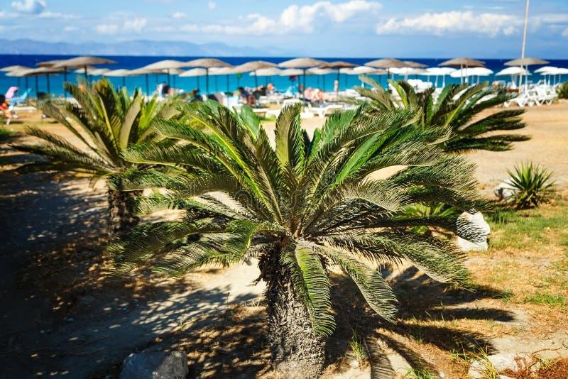Suddig fjärd med stranden som bakgrund och palmträdet i förgrunden royaltyfri fotografi