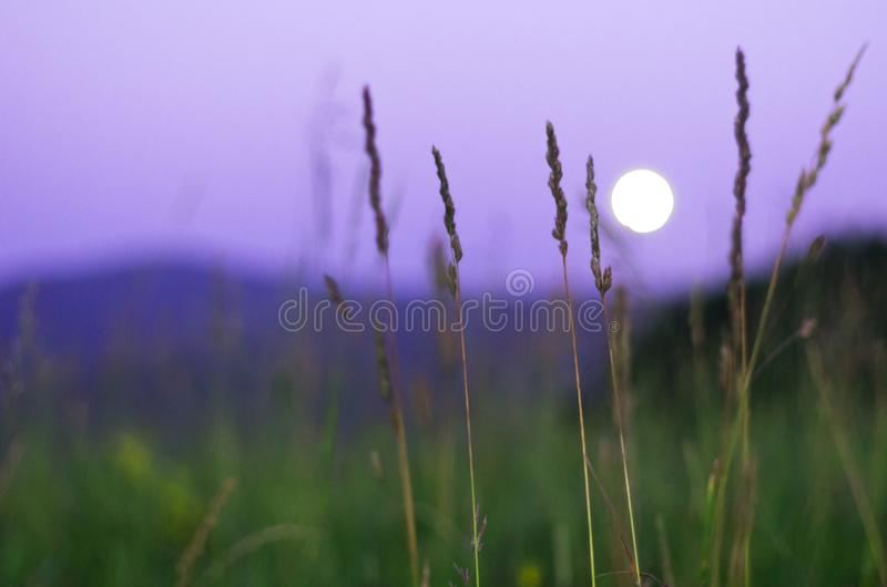 Suddig fullmåne som stiger över Altai berg, Kasakhstan, sett igenom högväxt grönt gräs på sommarnatt arkivfoton
