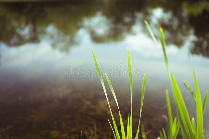 Suddig gräsplan och sjö Maj arkivbilder