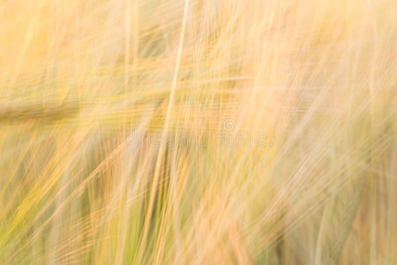 Suddig gulingabstrakt begreppbakgrund med en övervikt av linjer royaltyfri foto