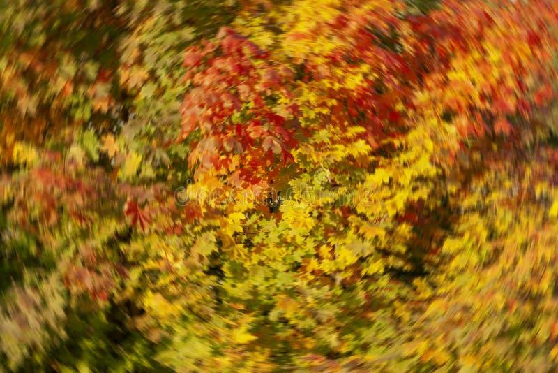 Suddig höstbakgrund av gröna gula röda sidor royaltyfri fotografi