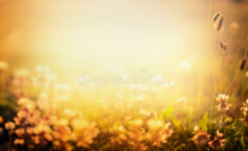 Suddig naturbakgrund med blommor och solnedgången tänder fotografering för bildbyråer