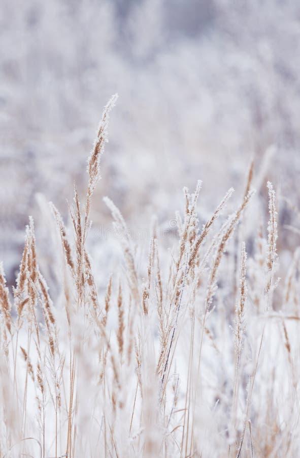 Suddig vinterbakgrund, snöflingor för torrt gräs arkivfoto
