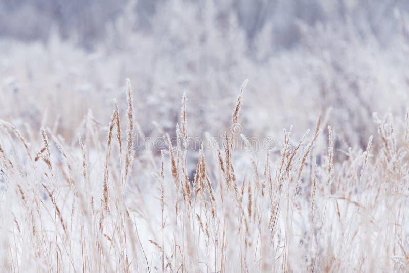 Suddig vinterbakgrund, snöflingor för torrt gräs arkivbild