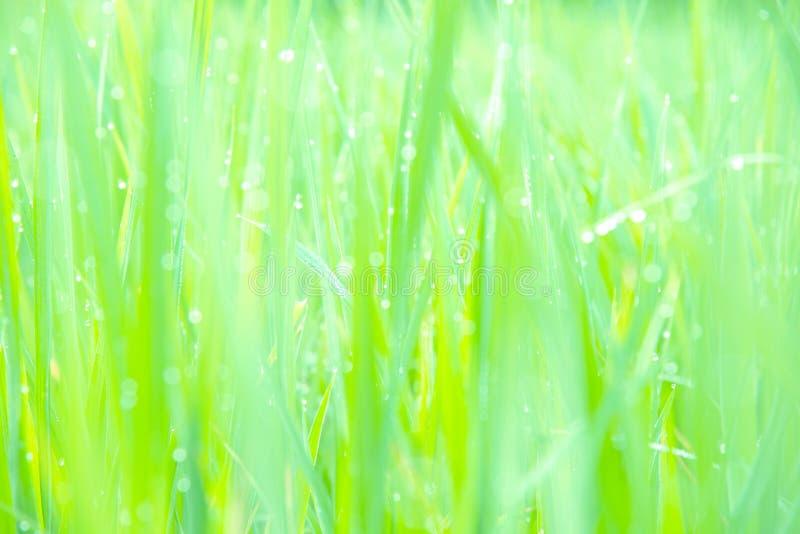 Suddiga gröna rissidor royaltyfria bilder