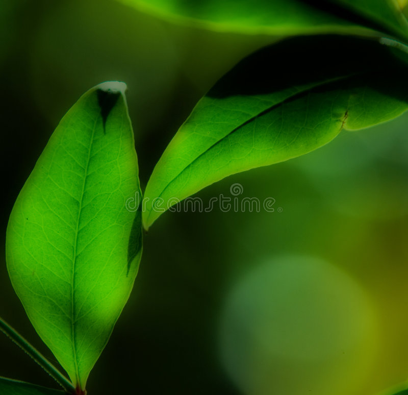 suddigheta drömlika leafs två royaltyfri bild