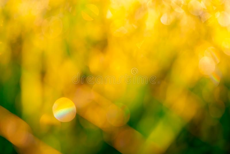 Suddigt fält för guld- och grönt gräs i morgonen med solljus Gul bokehbakgrund av solsken i vår Natur fotografering för bildbyråer