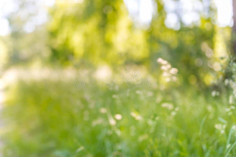 Suddigt härligt sommarlandskap med att blomstra ängen och blommor lös vårsommar blommar att blomma royaltyfria bilder