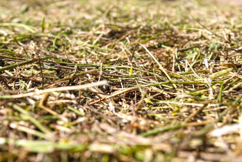 Suddigt mejat gräs på jordningen arkivbilder