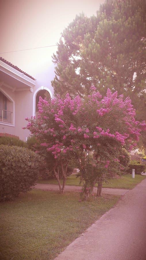 Sueño de mi vida en Surgut imagen de archivo libre de regalías