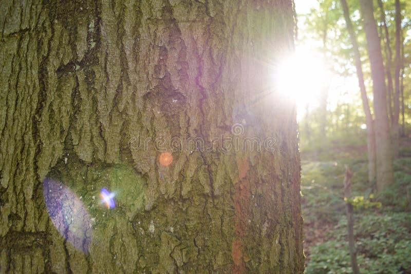 Sueño del bosque fotografía de archivo