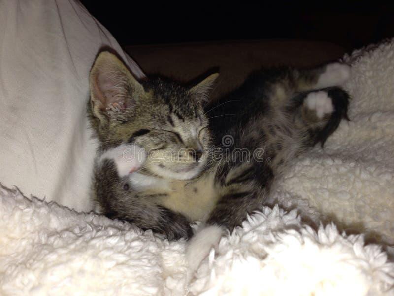 Sueño del gatito foto de archivo