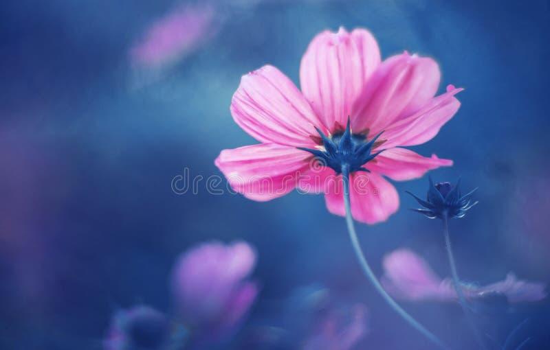 Sueño del rosa de la flor fotografía de archivo libre de regalías