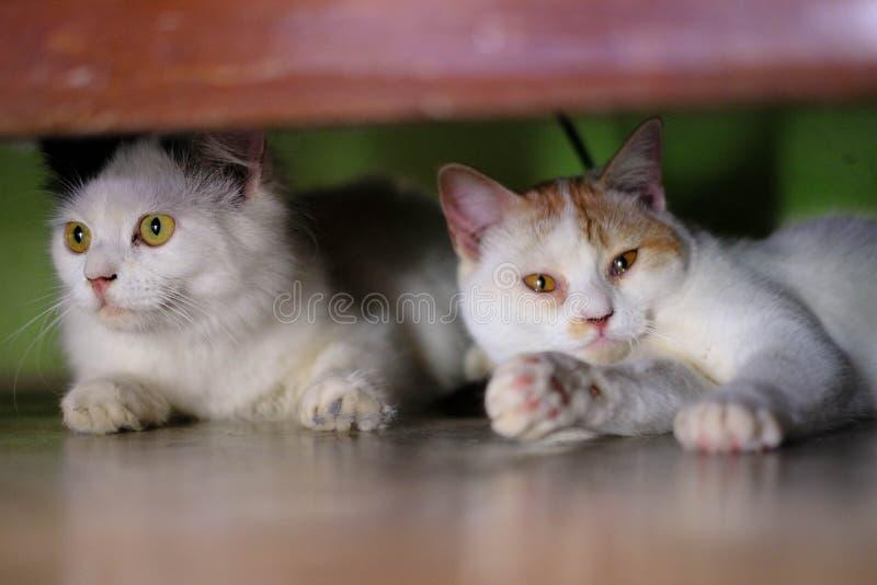 Sueño gordo del gato persa en banco rojo imagen de archivo libre de regalías