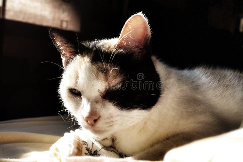 Sueño lindo del gato en casa fotos de archivo libres de regalías