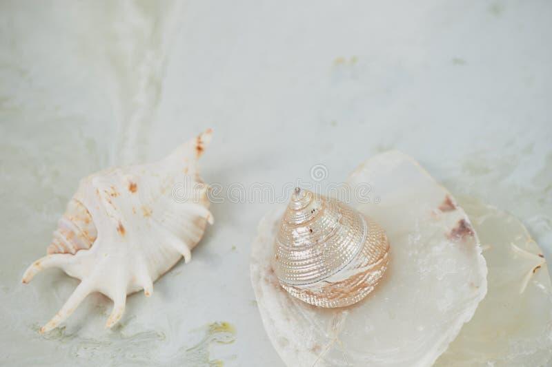 Sueños sobre el mar Cáscaras, fondo nacarado, ligero imagen de archivo