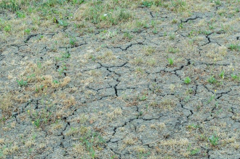 Suelo agrietado seco con la hierba amarilleada foto de archivo
