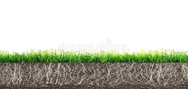 Suelo de hierba y tierra con raíces aisladas fotografía de archivo