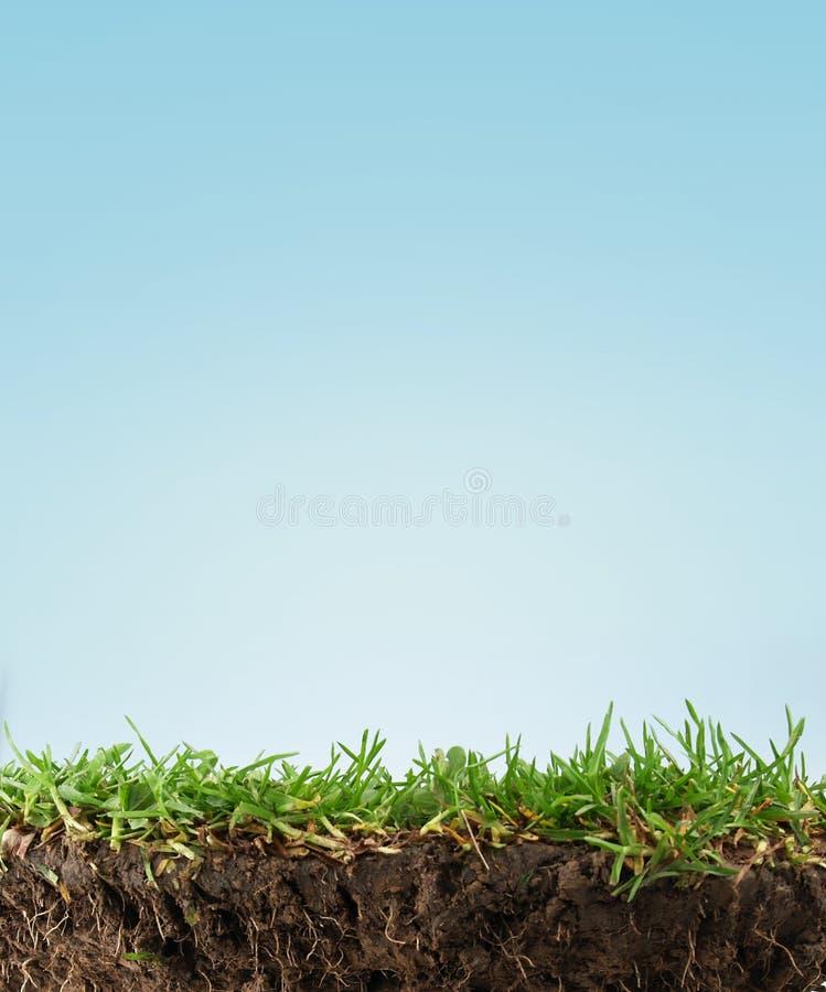 Suelo de la hierba fotos de archivo