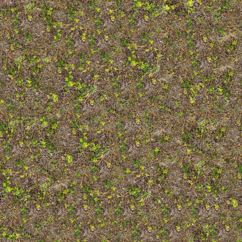 Suelo de la primavera con los lanzamientos jovenes de plantas fotografía de archivo