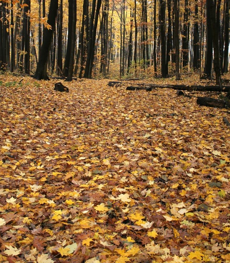 Suelo del bosque de la caída
