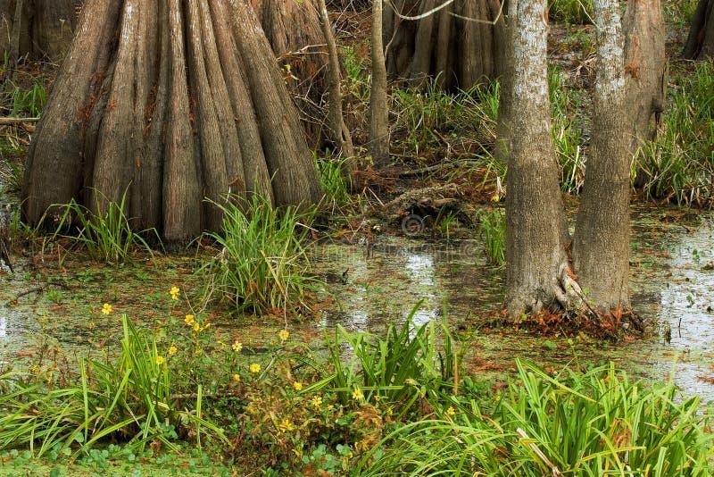 Suelo del pantano imagen de archivo libre de regalías