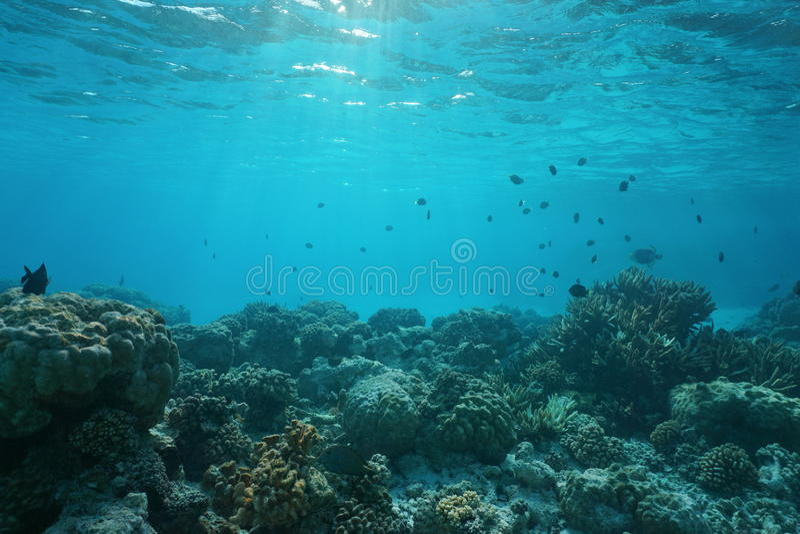 Suelo marino bajo con el arrecife de coral y los pescados imagen de archivo