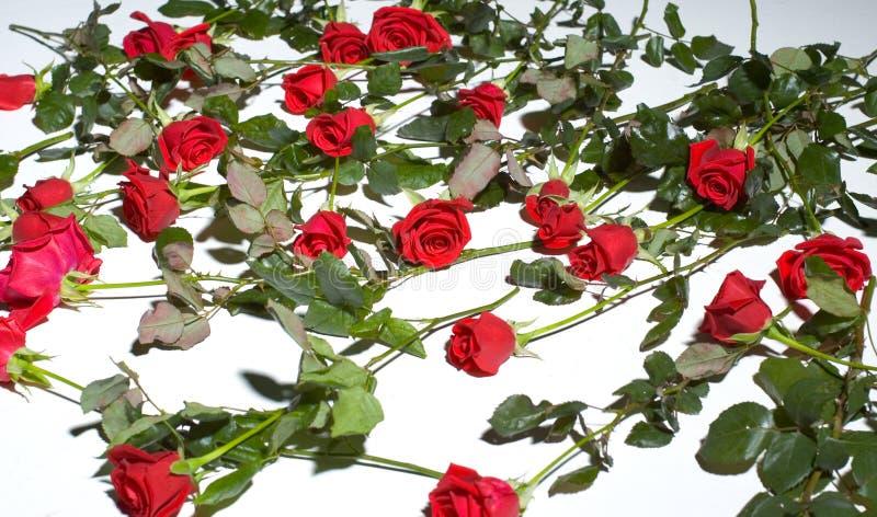 Suelo por completo de rosas foto de archivo