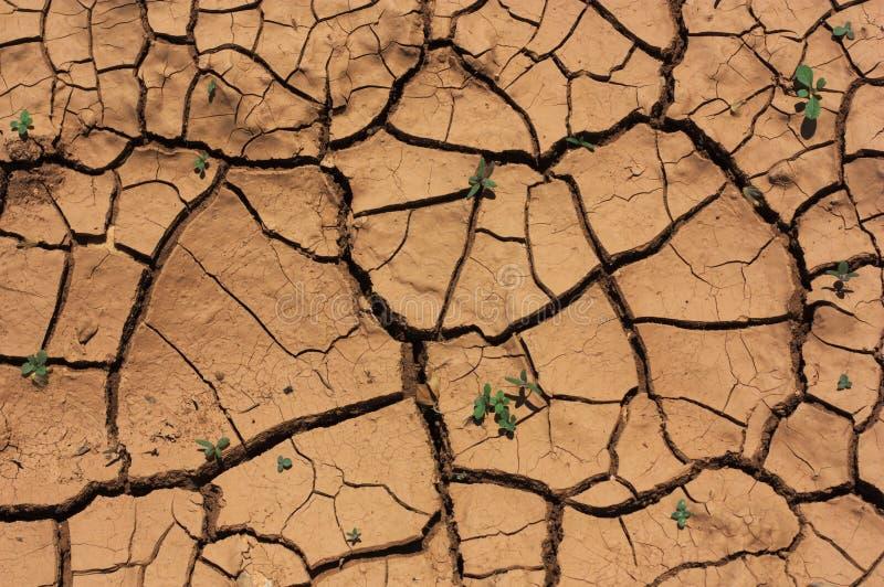 Suelo tierra seca agrietada texturas foto de archivo for Tierra suelo wallpaper