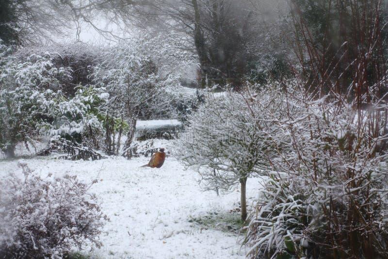 Suffolk śniegu scena obraz royalty free