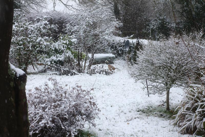 Suffolk śniegu scena obrazy stock
