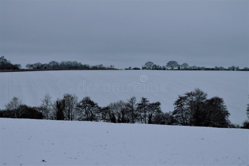 Suffolk snw in Shimpling stockbild