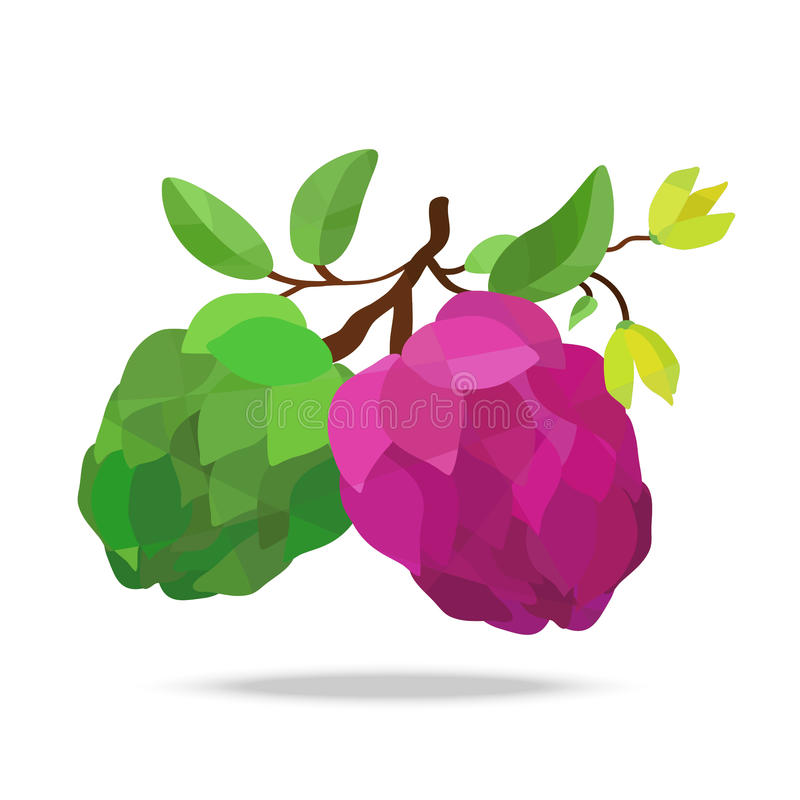 Sugar-apple and flower on white field royalty free illustration