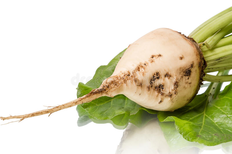 Download Sugar beet stock photo. Image of closeup, agriculture - 27034212