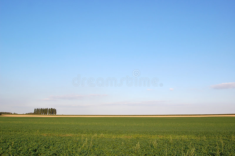 Download Sugar beet field stock photo. Image of agricultural, farm - 6735698