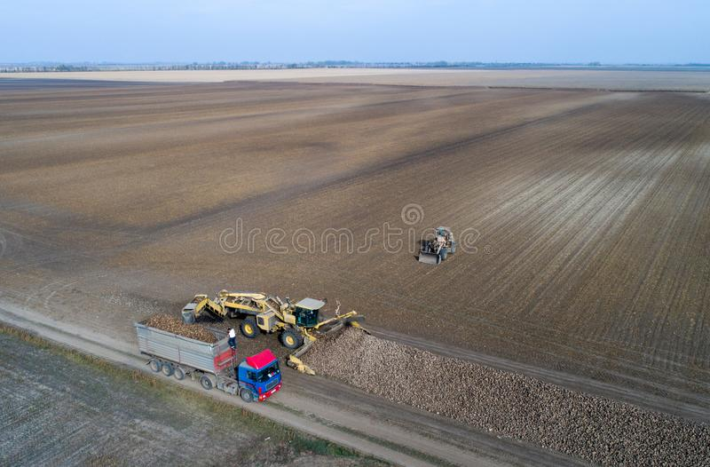 Sugar beet harvest. Aerial image of sugar beet harvest shoot from drone. Agricultural machinery loading truck trailer with roots royalty free stock photos