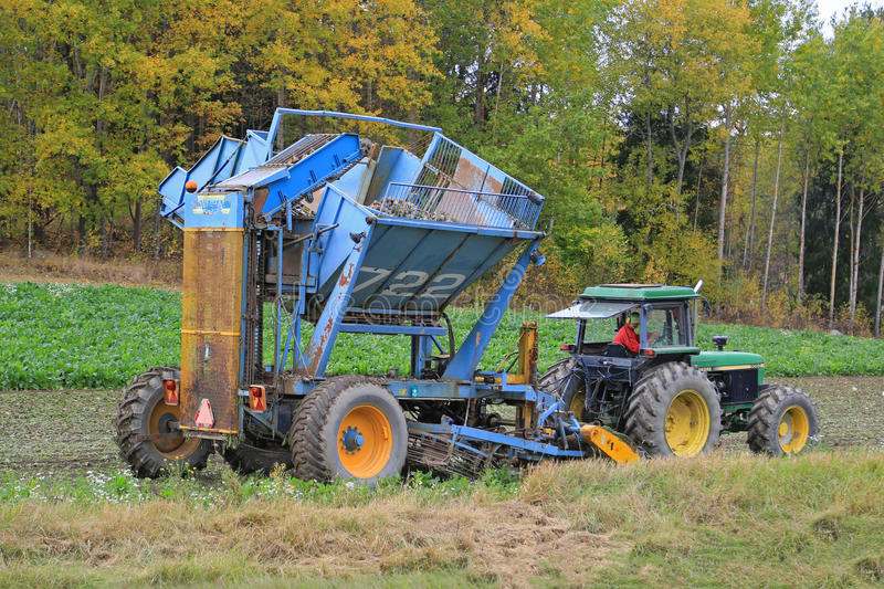 Sugar Beet Harvest in October royalty free stock photography