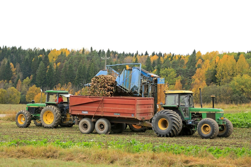 Sugar Beet Harvest in October royalty free stock images