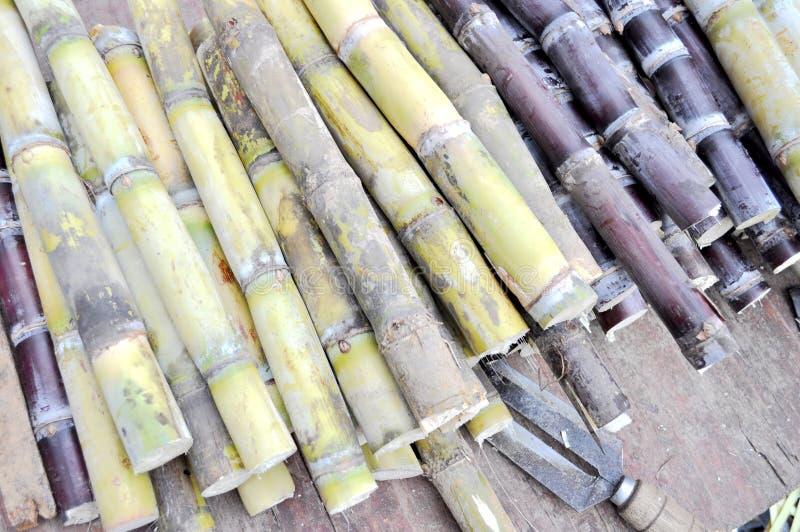 Sugar cane. Fresh sugar cane for sale on the market stock photo