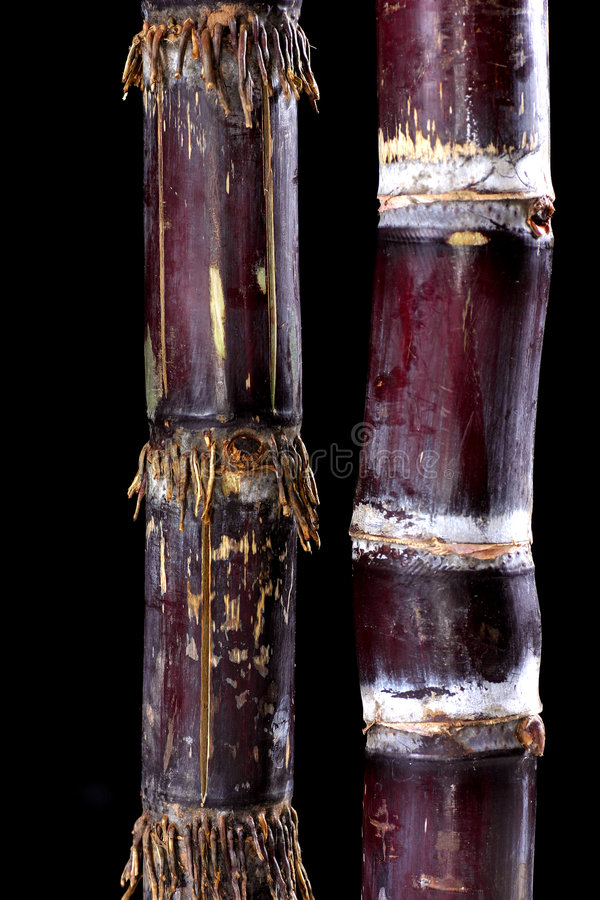 Sugar cane. Close up view of sugar cane on white background royalty free stock photo