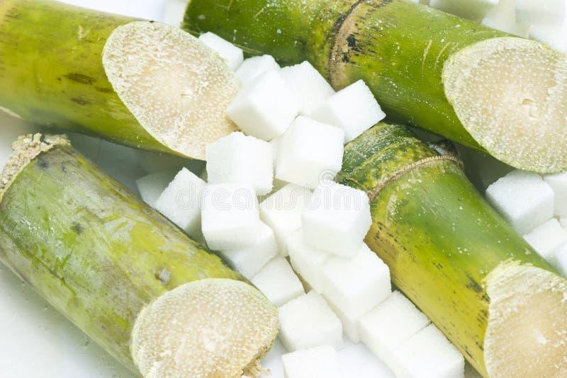 Sugar Cane fotos de stock royalty free